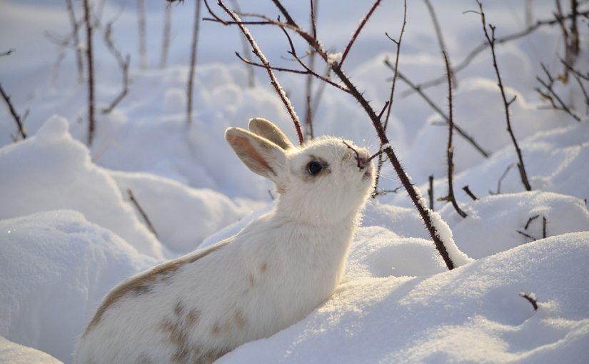 Tien tips voor konijnen in de winter