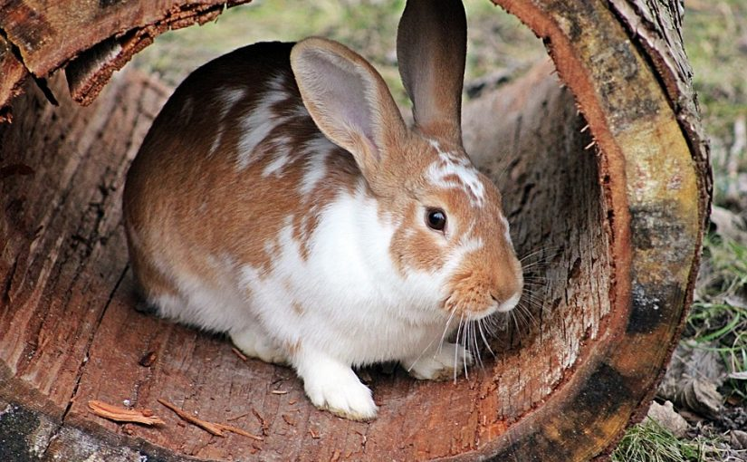 Basisbehoeften van een konijn