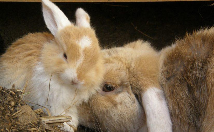 Hoe oud is een konijn in mensenjaren?