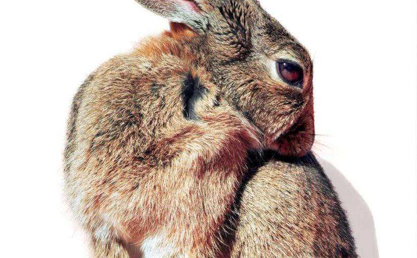 konijn diarree