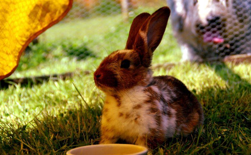 Tien tips voor konijnen in de zomer
