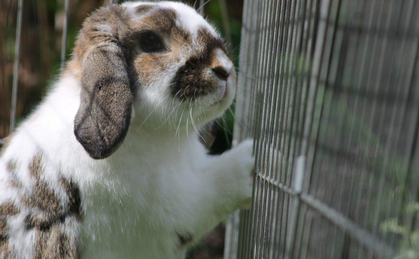 Een goed konijnenhok kiezen